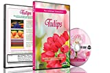 Flower and Tulip DVD - Flowers of Holland - Videos For Relaxation